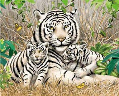 Набор для росписи по номерам Семья тигров
